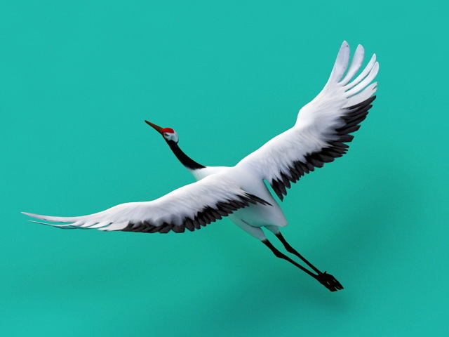 2018] Grayson M: Whooping cranes: text, images, music, video